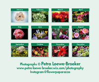 Picture of Flower Booklet Calendar