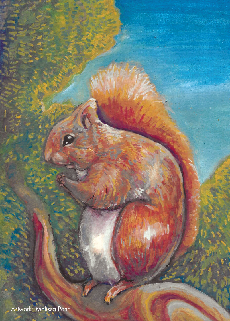 Picture of Squirrel Melissa Penn Cards