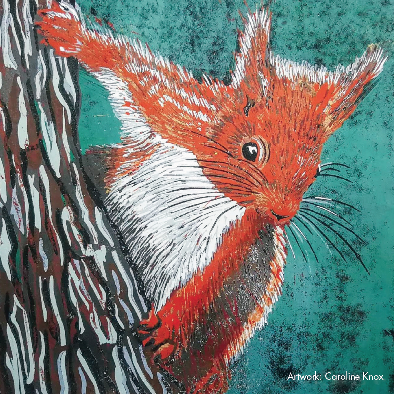 Picture of Squirrel Greeting Cards Set
