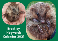 Picture of Brackley Hogwatch Calendar