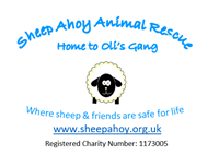 Picture for category Sheep Ahoy Animal Rescue