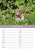 Picture of Wild Baby Bunnies Calendar