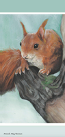 Picture of Squirrel Meg Hewison Cards