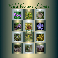 Picture of Wild Flowers of Crete Calendar